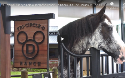 THE NEW TRI-CRICLE-D RANCH AT DISNEY'S FORT WILDERNESS RESORT