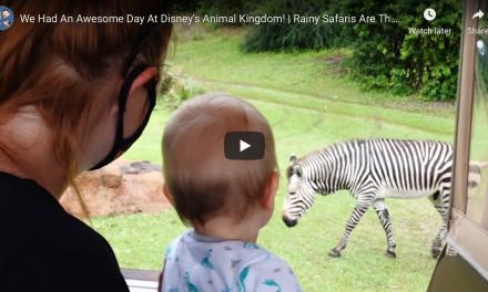 3 THINGS TO DO AT DISNEY'S ANIMAL KINGDOM